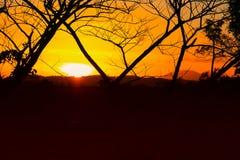 Silueta del árbol y de la rama en la puesta del sol amarillo-naranja en paisaje hermoso del cielo en la naturaleza: con el espaci Imagen de archivo libre de regalías