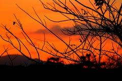 Silueta del árbol y de la rama en la puesta del sol amarillo-naranja en paisaje hermoso del cielo en la naturaleza: con el espaci Fotografía de archivo libre de regalías