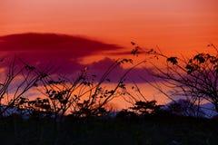 Silueta del árbol y de la rama en la puesta del sol amarillo-naranja en paisaje hermoso del cielo en la naturaleza: con el espaci Fotos de archivo