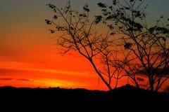 Silueta del árbol y de la rama en la puesta del sol amarillo-naranja en paisaje hermoso del cielo en la naturaleza: con el espaci Foto de archivo libre de regalías