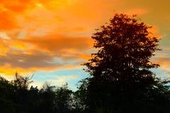 Silueta del árbol y de la rama en la puesta del sol en imagen hermosa del paisaje del cielo en la naturaleza Fotos de archivo libres de regalías