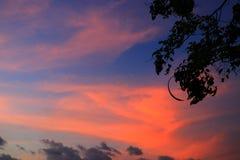 Silueta del árbol y de la rama en la puesta del sol en imagen hermosa del paisaje del cielo en la naturaleza Imágenes de archivo libres de regalías