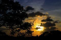 silueta del árbol y de la rama en la puesta del sol en imagen hermosa del paisaje del cielo en la naturaleza: con el espacio de l Fotografía de archivo libre de regalías