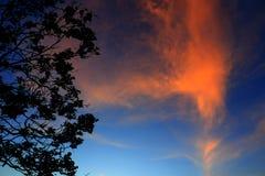 silueta del árbol y de la rama en la puesta del sol en imagen hermosa del paisaje del cielo en la naturaleza: con el espacio de l Imagen de archivo libre de regalías