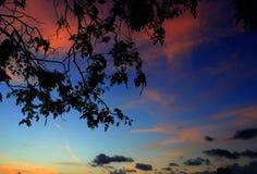silueta del árbol y de la rama en la puesta del sol en imagen hermosa del paisaje del cielo en la naturaleza: con el espacio de l Foto de archivo