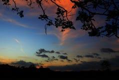 silueta del árbol y de la rama en la puesta del sol en imagen hermosa del paisaje del cielo en la naturaleza: con el espacio de l Imagenes de archivo