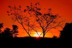 silueta del árbol y de la rama en la puesta del sol en imagen hermosa del paisaje del cielo en la naturaleza: con el espacio de l Fotos de archivo