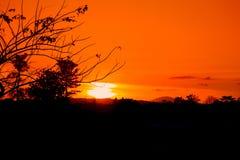 silueta del árbol y de la rama en la puesta del sol en imagen hermosa del paisaje del cielo en la naturaleza: con el espacio de l Fotografía de archivo
