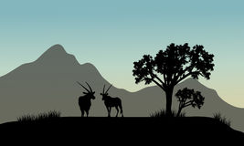 Silueta del antílope en colinas Fotografía de archivo