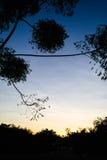 Silueta del arbusto y de árboles contra la puesta del sol Imágenes de archivo libres de regalías