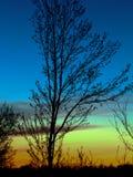 Silueta del arce en la puesta del sol Foto de archivo libre de regalías
