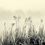 Silueta del bastón en la niebla - concepto del minimalismo en blanco y negro Imagen de archivo libre de regalías