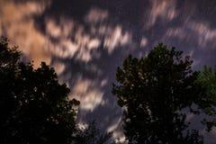 Silueta del bosque en el cielo nocturno Imagen de archivo libre de regalías
