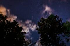 Silueta del bosque en el cielo nocturno Fotografía de archivo
