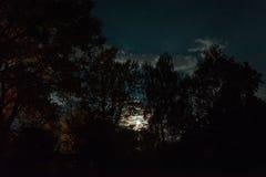 Silueta del bosque en el cielo nocturno Imagen de archivo