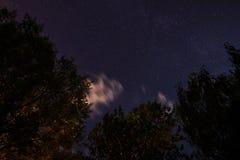 Silueta del bosque en el cielo nocturno Imagenes de archivo