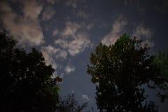 Silueta del bosque en el cielo nocturno Fotos de archivo libres de regalías