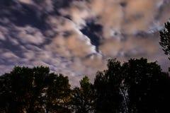 Silueta del bosque en el cielo nocturno Fotografía de archivo libre de regalías
