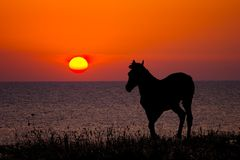 Silueta del caballo en puesta del sol Imagen de archivo