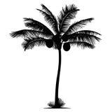 Silueta del coco de la palmera Fotos de archivo