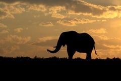 Silueta del elefante en la puesta del sol Fotos de archivo libres de regalías