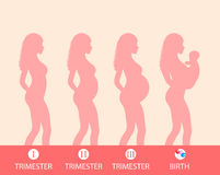 Silueta del embarazo, etapa del embarazo, trimestres, parto Ilustración del vector Imagenes de archivo