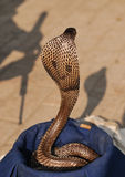Silueta del encantador de serpiente Imágenes de archivo libres de regalías