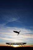 Gimnasta en el trampolín en puesta del sol Foto de archivo libre de regalías