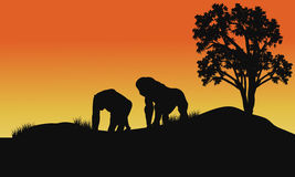 Silueta del gorila en campos Fotografía de archivo libre de regalías