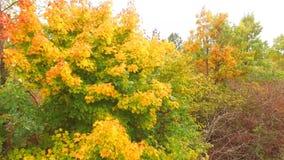Silueta del hombre de negocios Cowering Árboles vivos en la arboleda en Autumn Time metrajes
