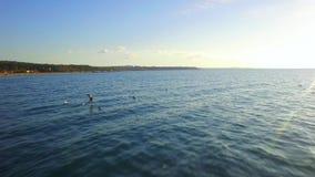 Silueta del hombre de negocios Cowering Aguas de mar onduladas con las gaviotas almacen de metraje de vídeo