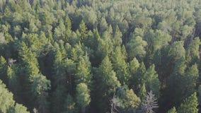 Silueta del hombre de negocios Cowering El volar sobre los árboles forestales hermosos Tiro de la cámara aérea Panorama del paisa almacen de metraje de vídeo