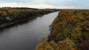 Silueta del hombre de negocios Cowering El volar sobre el río Día hermoso del otoño La cámara vuela hasta el río sobre el bosque  metrajes