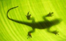 Silueta del lagarto Fotografía de archivo