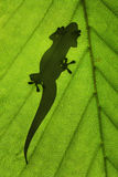 Silueta del lagarto Imagenes de archivo