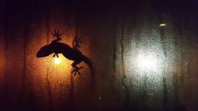 Silueta del lagarto en la ventana de niebla de la ventana en la noche almacen de video