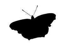 Silueta del negro de la mariposa de pavo real Fotografía de archivo libre de regalías