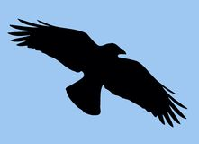 Silueta del pájaro Fotos de archivo libres de regalías