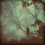 Silueta del pájaro cantante contra el cielo cambiante de la tarde fotografía de archivo libre de regalías