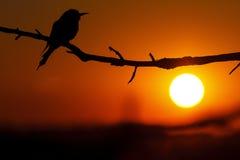 Silueta del pájaro raro en la puesta del sol Imágenes de archivo libres de regalías
