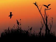 Silueta del pájaro y del árbol fotos de archivo libres de regalías