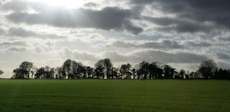 Silueta del paisaje del árbol Fotografía de archivo