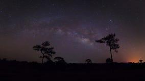 Silueta del panorama del árbol de pino con la nube y la vía láctea largo imagen de archivo libre de regalías