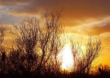 Silueta del parque nacional de Saguaro Fotos de archivo libres de regalías