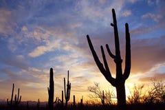 Silueta del parque nacional de Saguaro Foto de archivo libre de regalías
