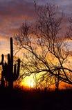 Silueta del parque nacional de Saguaro Imagenes de archivo
