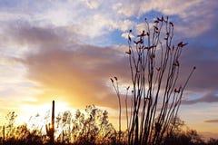 Silueta del parque nacional de Saguaro en la puesta del sol Fotos de archivo