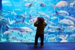 Silueta del pequeño niño que disfruta de vistas de la vida subacuática foto de archivo