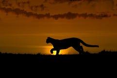 Silueta del puma Imagenes de archivo