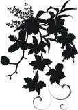 Silueta del ramo de la orquídea Fotos de archivo